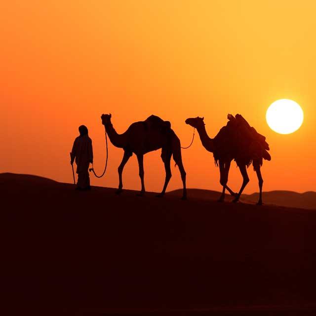 chameaux dans le desert de Dubaï au coucher de soleil