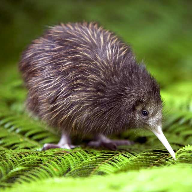 kiwi voyage en nouvelle zélande