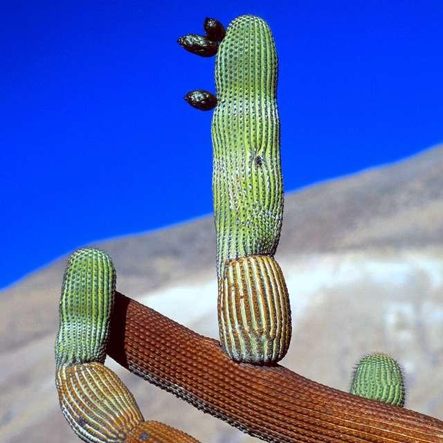 Voyage au Chili - Cactus
