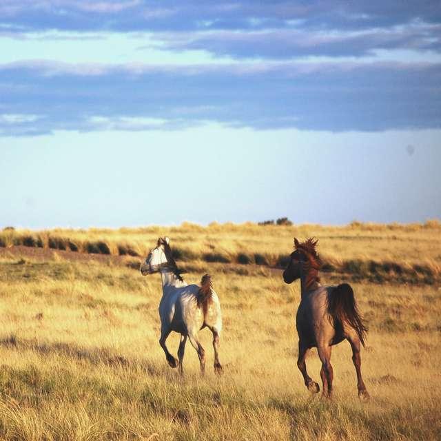 Voyage en Patagonie- Chevaux