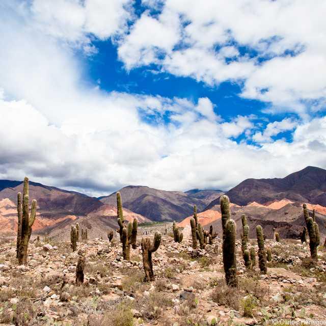 Voyage en Argentine - Tilcara