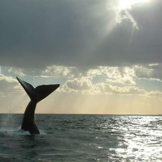 Voyage en Patagonie- Baleine