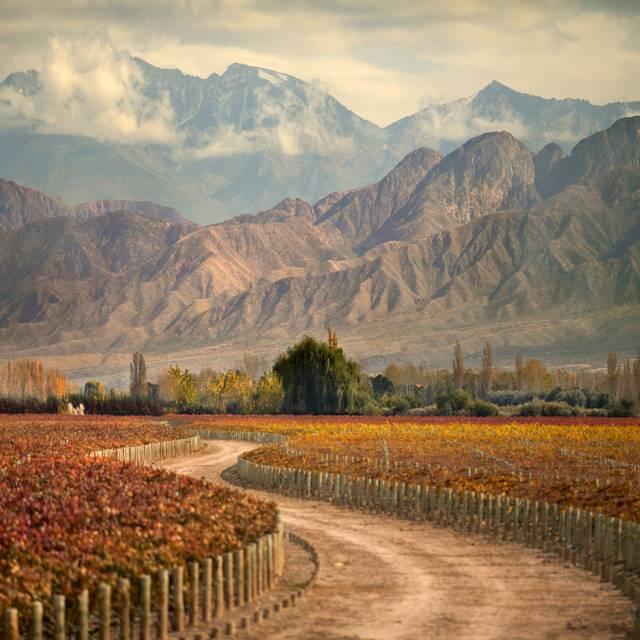 Voyage en Argentine - Vignoble
