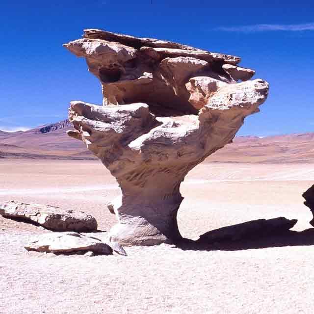 Altiplano Bolivie arbre de pierre
