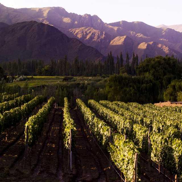 Autotour Argentine - Vignoble, Cafayate