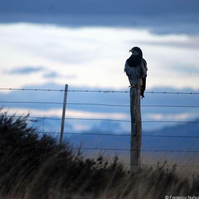 Séjour en Patagonie