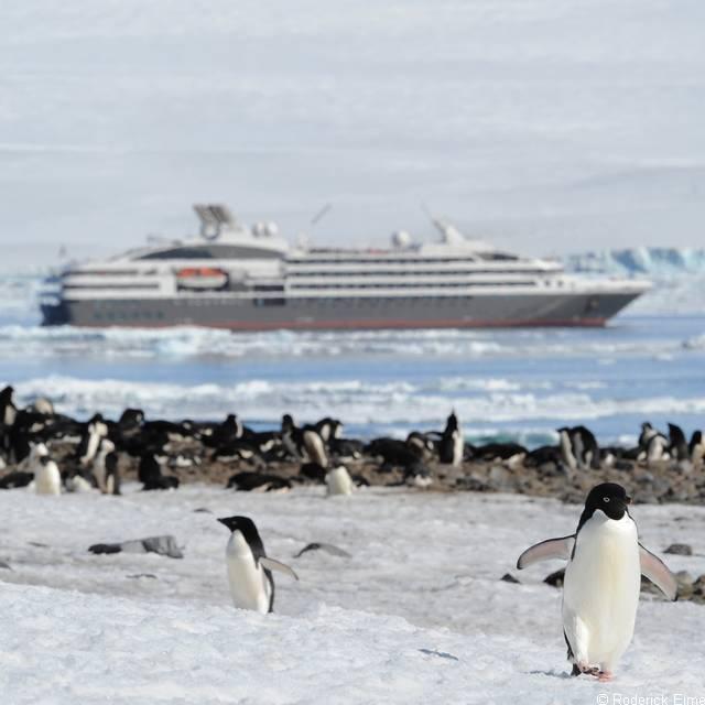 Voyage en Argentine - Colonie de pingouins