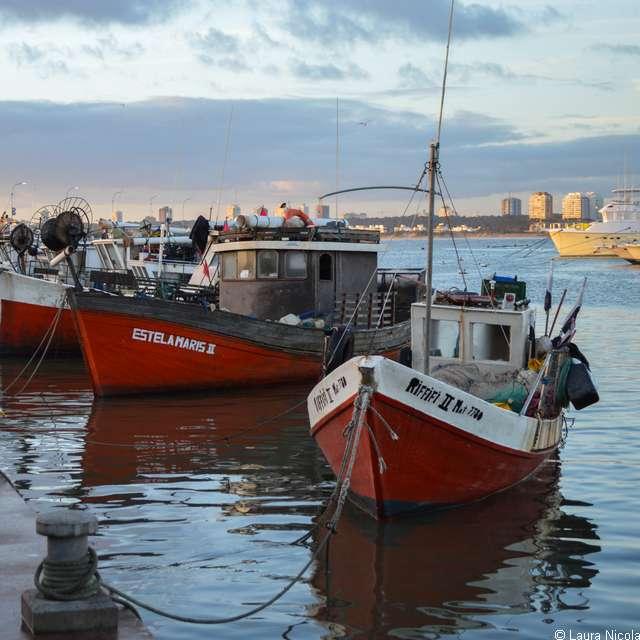Séjour en Uruguay - Uruguay, Port de Punta Del Este