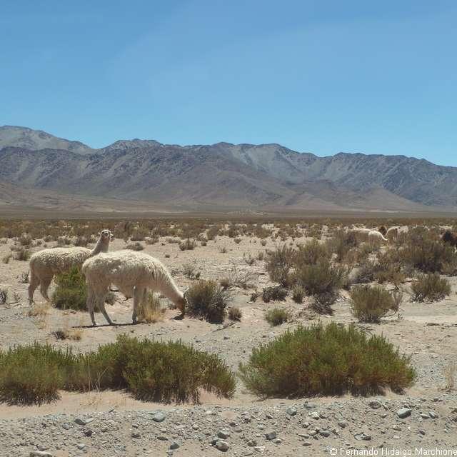 Voyage autotour en Argentine - Paysage andin