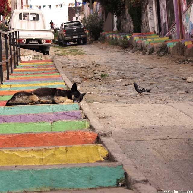 Voyage au Chili - Valparaiso - Séjour à Santiago