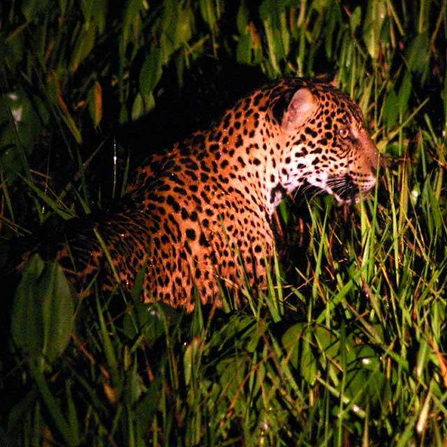 Jaguar Ecolodge Caiman, Voyage au Brésil