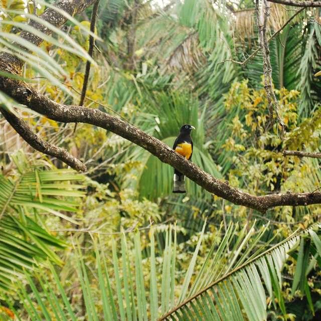 Autotour Costa Rica - Forêt