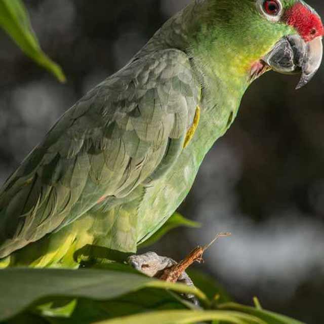 Observation des oiseaux à Anavilhanas Jungle Lodge Brésil