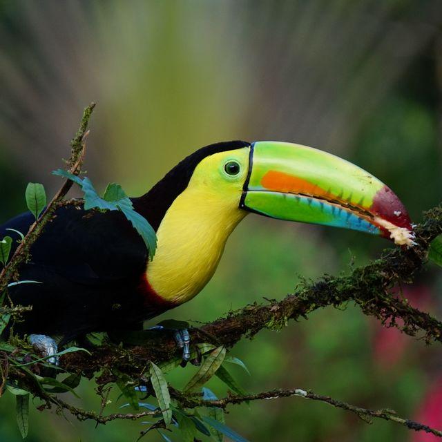 Autotour Costa Rica - Toucan