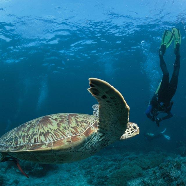 Plongée tortue, Voyage Panama