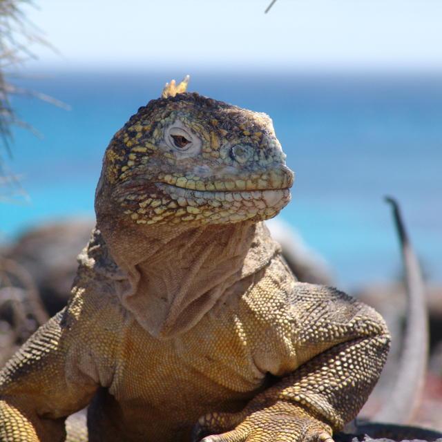 Séjour au Galapagos