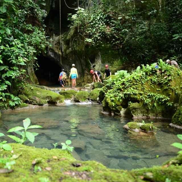 Voyage au Belize - Forêt tropicale