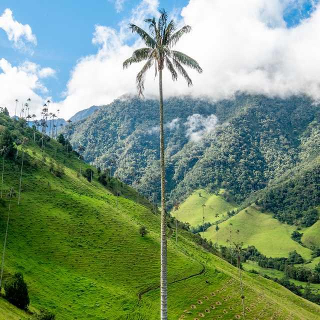 voyage en Colombie - Région du Café