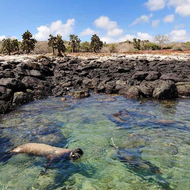 Voyage aux Galapagos - phoque